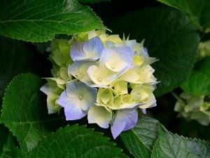 姫の沢荘 花